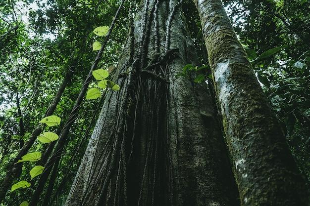 Flacher winkelschuss von langblättrigen kiefern, die in einem grünen wald wachsen Kostenlose Fotos