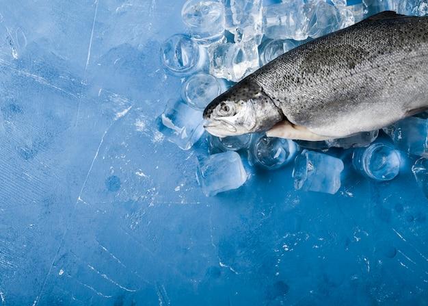 Flachlegender fisch mit eiswürfeln Kostenlose Fotos