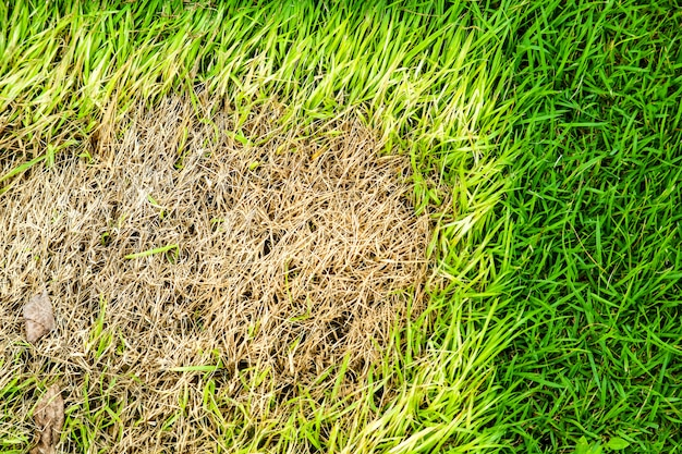Fläche von trockenem gras kann nicht wachsen, etwas bedecken diese und haben kein sonnenlicht Premium Fotos