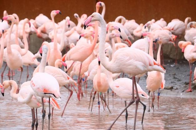 Flamingos stehen im wasser Kostenlose Fotos