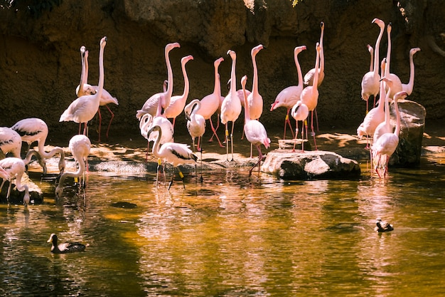 Flamingos Kostenlose Fotos