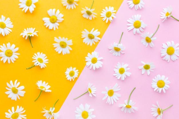 Flat lay gänseblümchen anordnung Premium Fotos