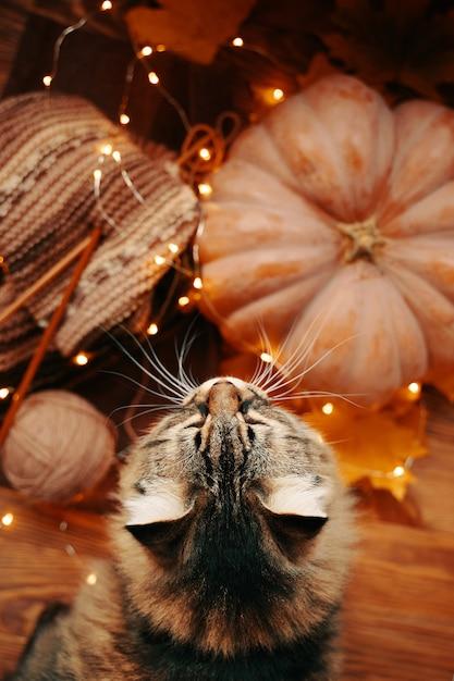 Flauschige katze, ein reifer kürbis und ein gestrickter farbiger schal mit einer hellen girlande Premium Fotos