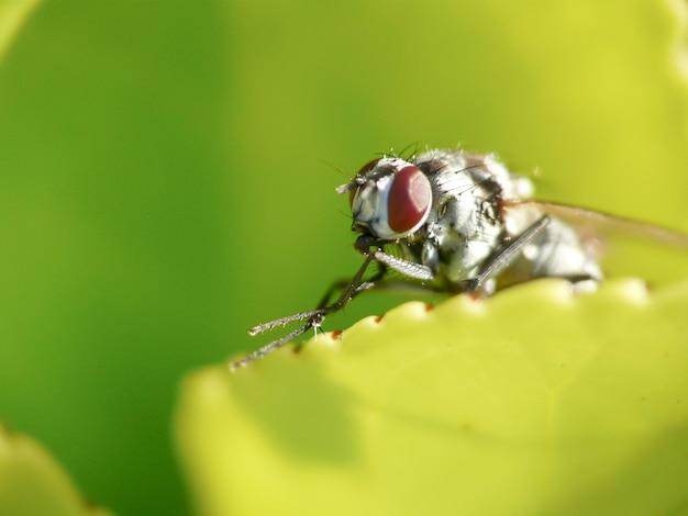 Fliege thront auf dem blatt einer pflanze in einem garten Premium Fotos