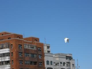 Fliegen über dächer Kostenlose Fotos