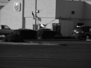Fliegen über den parkplatz Kostenlose Fotos