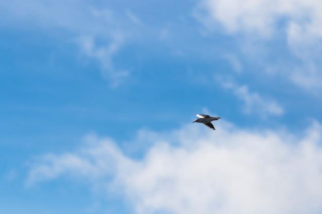 Fliegende möwe im himmel mit wolken Premium Fotos