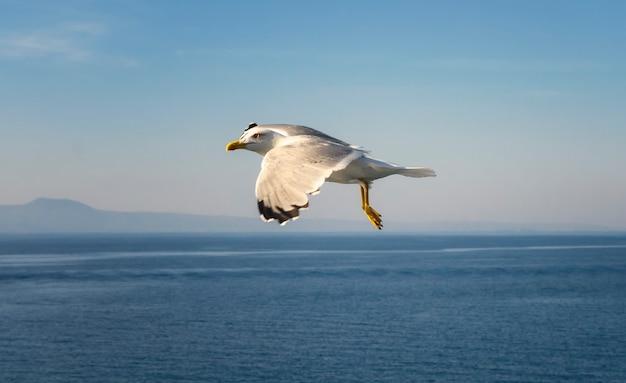 Fliegende möwen über dem meer Premium Fotos