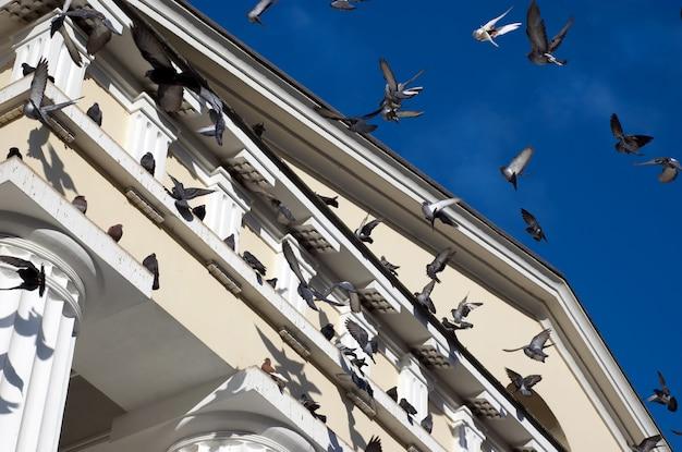Fliegende tauben Premium Fotos