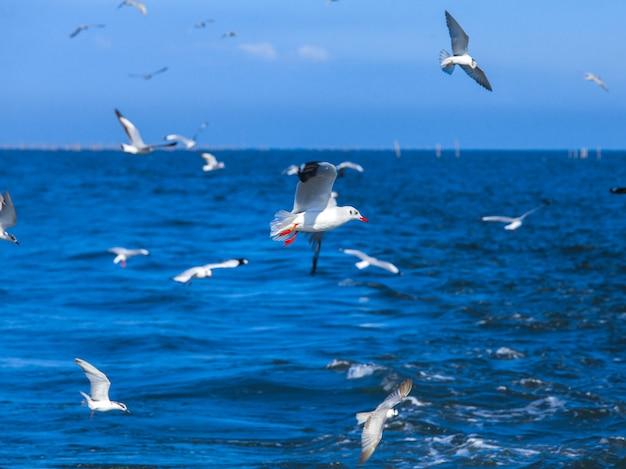 Fliegenseemöwen nach schnellboot im golf von thailand Premium Fotos