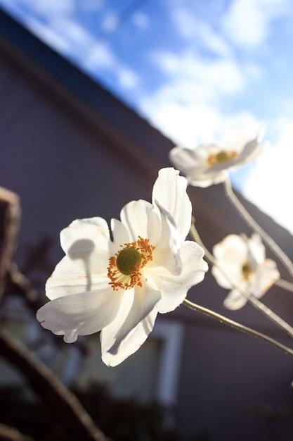 Flor blanca Premium Fotos