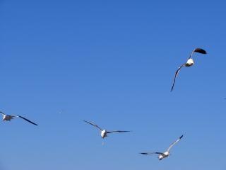 Flug der möwen Kostenlose Fotos