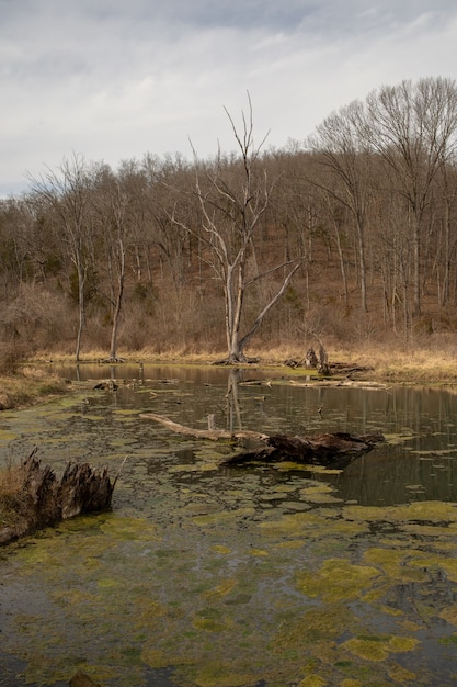 Fluss bedeckt von moosen, umgeben von trockenem gras und kahlen bäumen unter einem bewölkten himmel Kostenlose Fotos