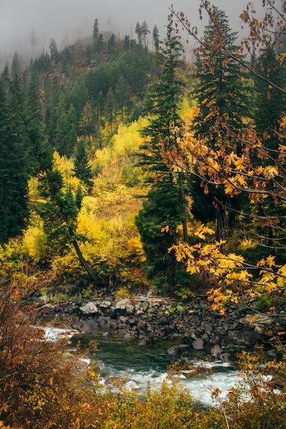 Fluss im herbstwald Premium Fotos