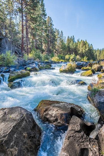 Fluss umgeben mit blumen im herbst während des tages Kostenlose Fotos