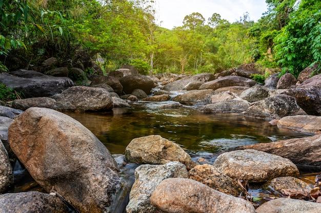 Flussstein und baum bunt, sehen wasserflussbaum im wald an Premium Fotos
