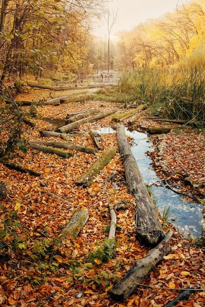 Folgen der entwaldung um den fluss in herbstfarbe Premium Fotos