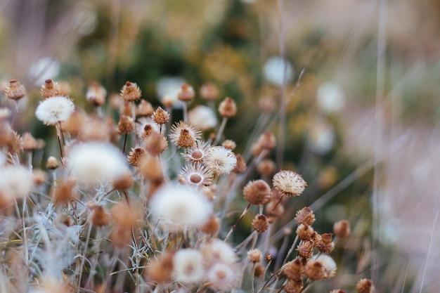 Fondo de plantas y flores del bosque. Premium Fotos
