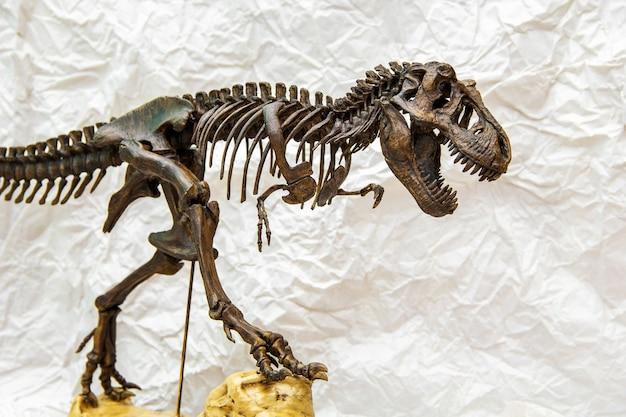 Fossilskelett von dinosaurierkönig tyrannosaurus rex Premium Fotos