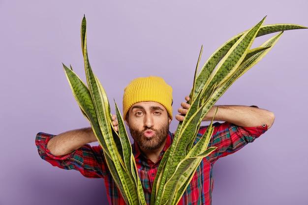 Foto des hobbygärtners schaut durch blätter der schlangenpflanze, hält lippen gefaltet, will jemanden küssen, kümmert sich um zimmerpflanze, trägt gelben hut und freizeithemd. pflanzenpflege- und naturkonzept Kostenlose Fotos