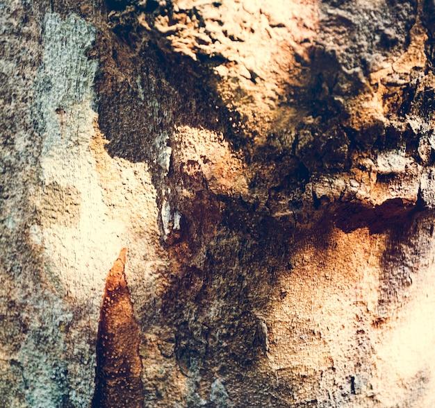Foto von sonnenschein auf der holzoberfläche Kostenlose Fotos