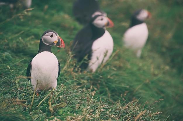 Fotografie mit selektivem fokus des weißen vogels Kostenlose Fotos