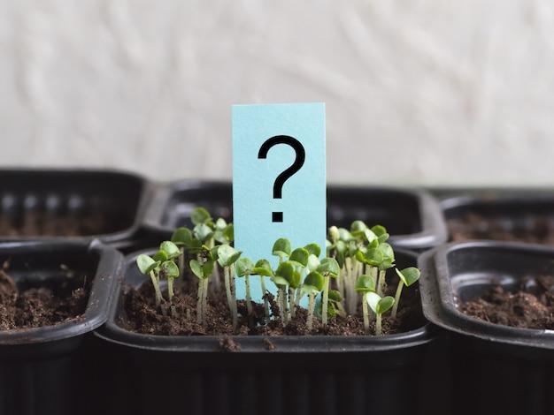 Fragezeichen und pflanze. gemaltes fragezeichen neben dem spross Premium Fotos