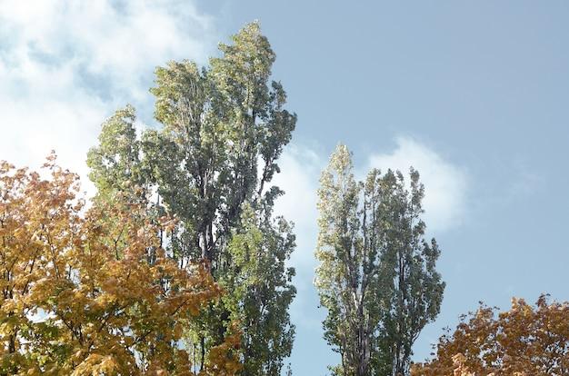 Fragment von bäumen, deren blätter sich im herbst verfärben Premium Fotos