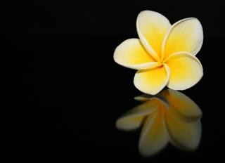 Frangipani Blüte, Flora Kostenlose Fotos
