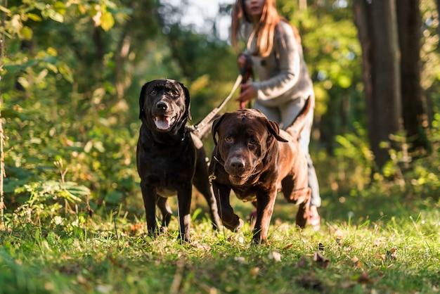 Frau, die leine beim gehen mit hund im park hält Kostenlose Fotos