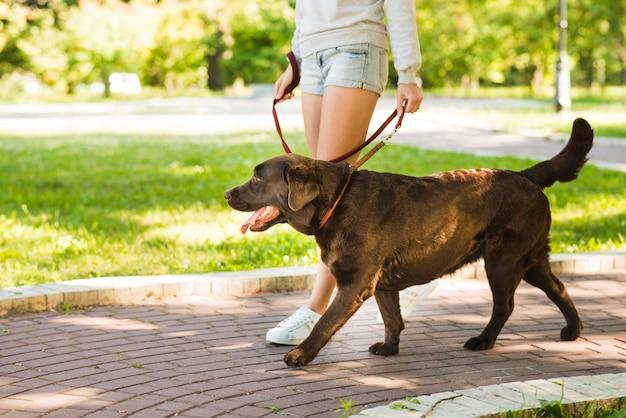 Frau, die mit ihrem hund auf gehweg im park geht Kostenlose Fotos