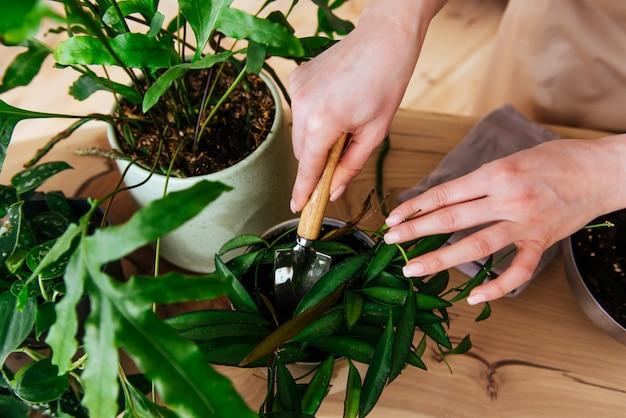 Frau, die pflanzen innennahansicht der hände innen plant Premium Fotos