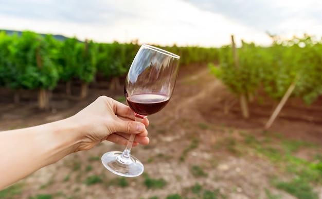 Frau, die rotwein, weinberg auf hintergrund schmeckt. glas rotwein gegen den weinberg. Premium Fotos