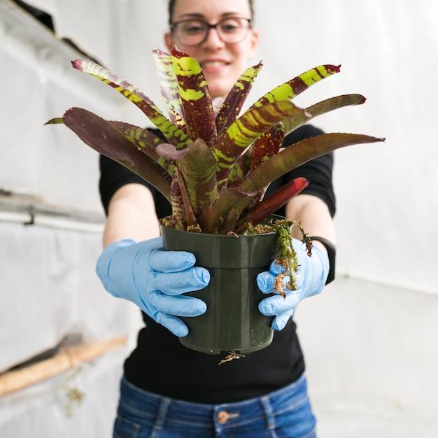 Frau im gewächshaus, das frischpflanze zeigt Kostenlose Fotos