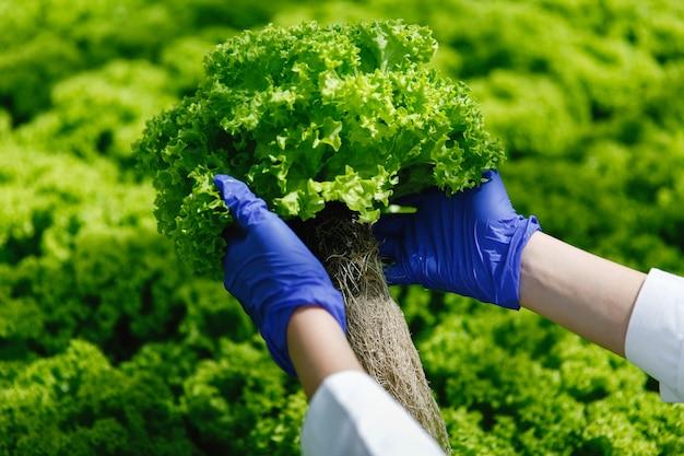 Frau in den blauen handschuhen hält grünen salat in ihren armen Kostenlose Fotos
