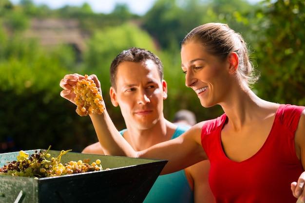 Frau und mann, die mit traubenerntemaschine arbeiten Premium Fotos