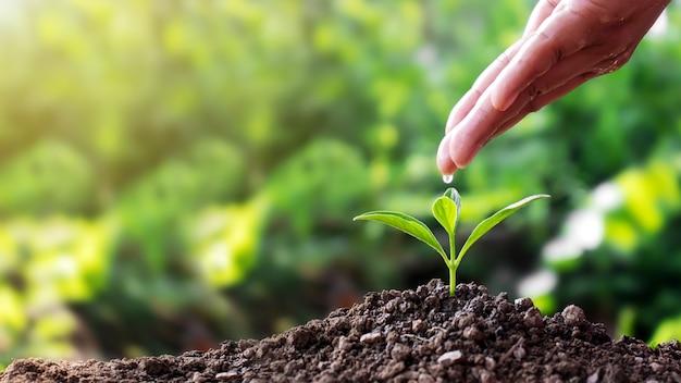 Frauen gießen mit den händen wasser, züchten setzlinge auf dem boden und wachsen pflanzen Premium Fotos