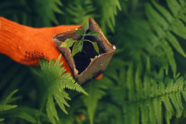 Frauenhände in handschuhen, die junge pflanze pflanzen Kostenlose Fotos