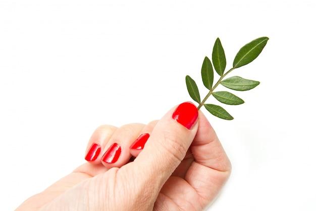 Frauenhände mit roter maniküre und grünem blatt Premium Fotos
