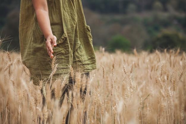 Frauenhand, welche die ohren des weizens mit weichheit auf dem gerstengebiet berührt Premium Fotos