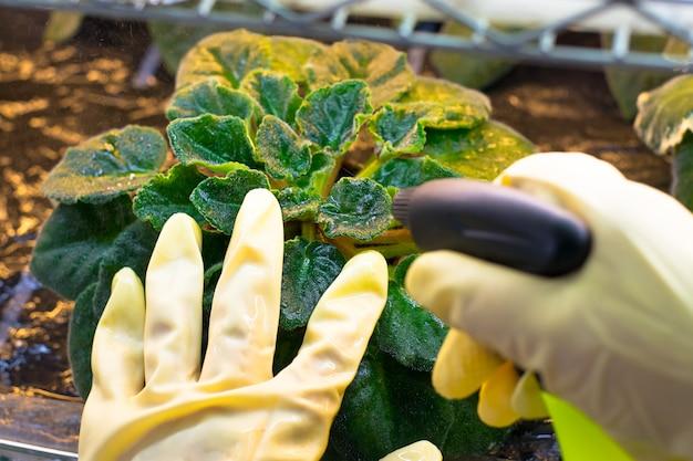 Frauensprühblumen im garten Premium Fotos