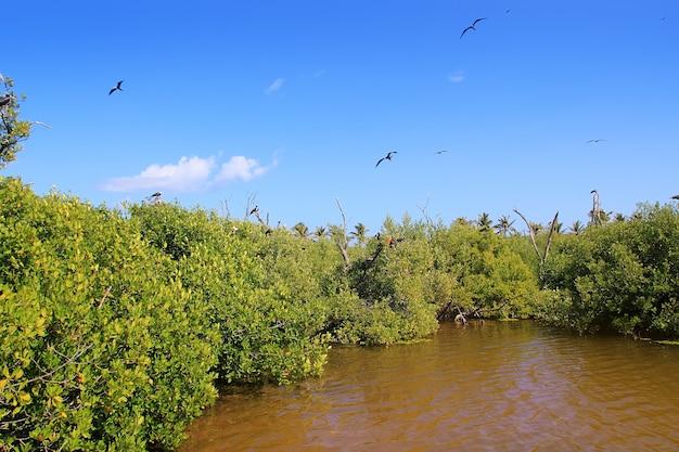 Fregattenvogel nachbildung contoy island mangrove Premium Fotos