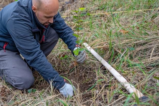 Freiwillige rußte junge bäume, um die wälder nach dem borkenkäferangriff wiederherzustellen Premium Fotos