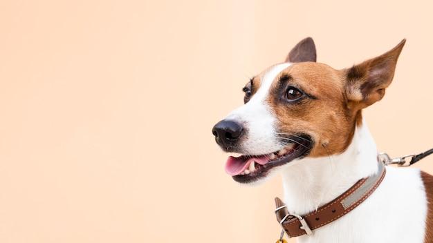Freundlicher hund mit der zunge außerhalb des kopieraumes Kostenlose Fotos