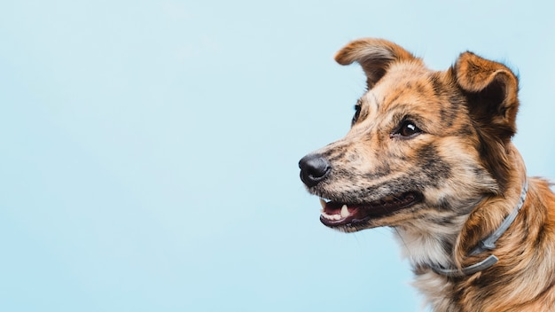 Freundlicher hund mit gehacktem ohrkopieraum Kostenlose Fotos