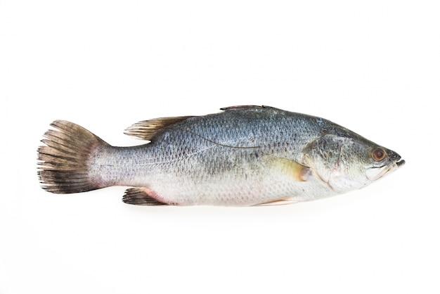 Frische bass mit weißem hintergrund Kostenlose Fotos