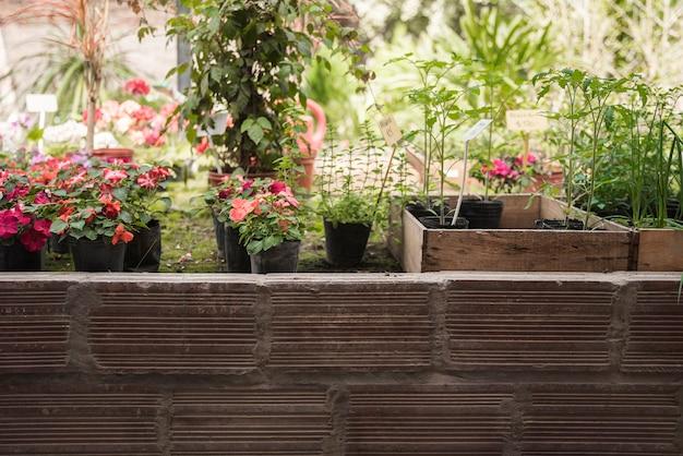Frische eingemachte blumenpflanzen, die im garten wachsen Kostenlose Fotos