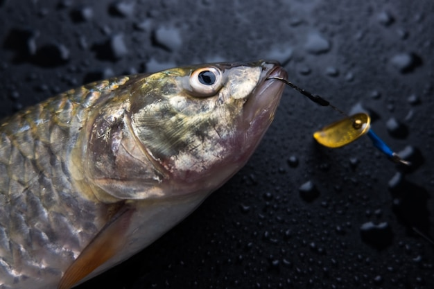 Frische fische auf nasser schwarzer tabelle Premium Fotos