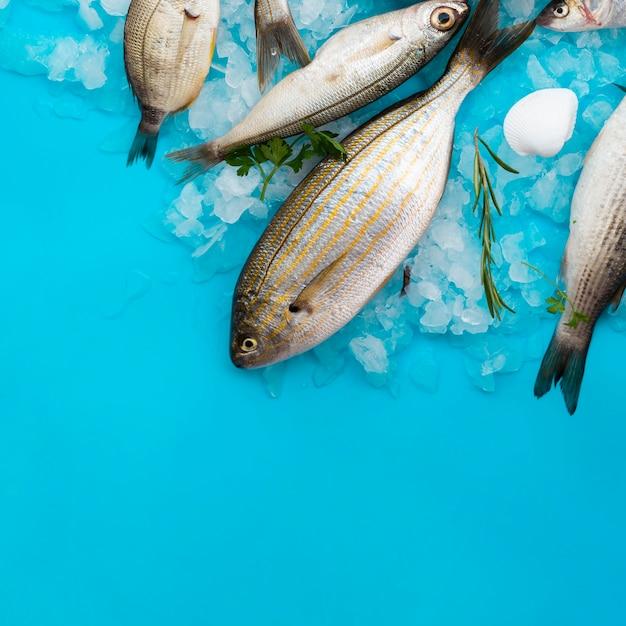 Frische fische der draufsicht mit kiemen auf eis Kostenlose Fotos
