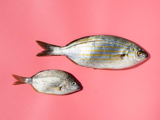 Frische fische der nahaufnahme mit kiemen Kostenlose Fotos